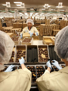 SOLID GROWTH: Photo shows workers packing boxes of chocolates at a candy manufacturing factory. Cocoaland's future earnings trajectory has been viewed as bright and intact, driven by its rapid capacity expansion, enlarged portfolio mix and wider customer base. — Bloomberg photo
