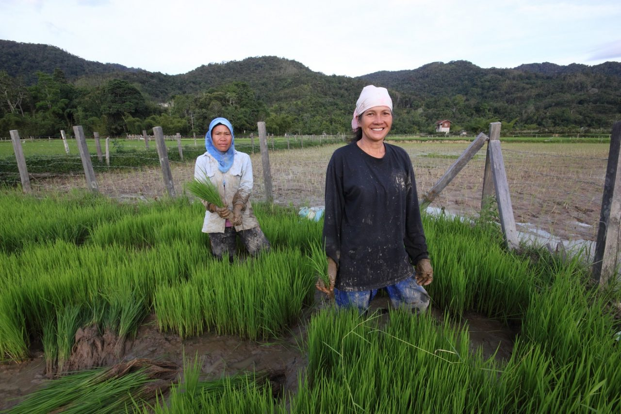 Women working in rice fields in the highlands.