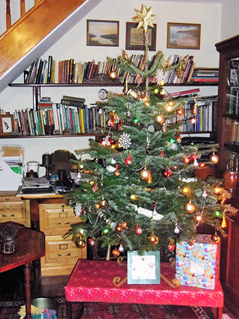 An indoor Norway spruce all decorated for Christmas. - The Christmas Tree! €� BorneoPost Online Borneo , Malaysia, Sarawak
