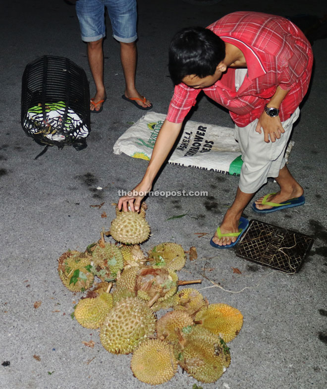 The orchard owner's grandson shows police some of the durians recovered from the suspects.