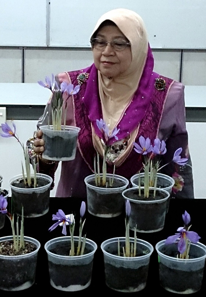 Dr Rosna showing the saffron plant. — Bernama photo