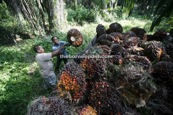 Felda Still Leads Malaysian Palm Oil Says Moody S Borneo Post Online