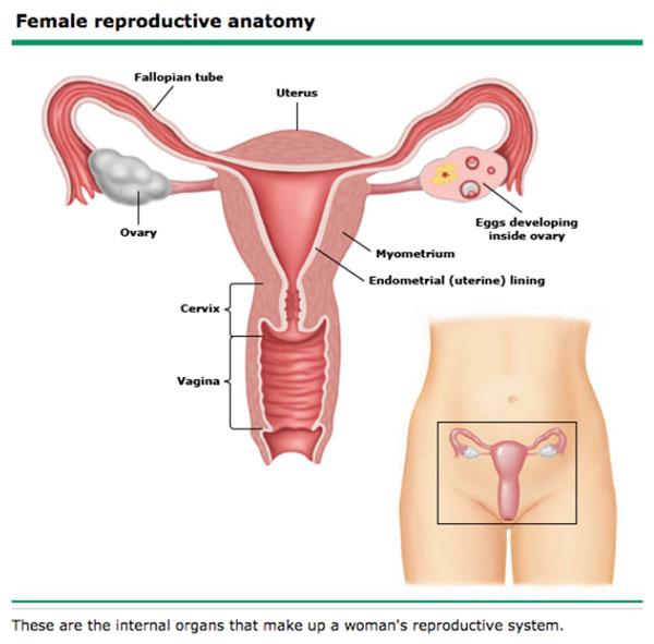 Examen coproparazitologic - Boli pentru tratamentul viermilor