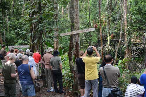 APES WATCHING: Visitors watching orang utans at the one of the feeding stations. — Photos courtesy of Sarawak Forestry Corporation.