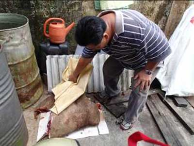 WILD BOAR MEAT SEIZED: A member of the raiding team  uncovering wild boar meat at the unmanned stall not far from a Kanowit jetty. The meat was later seized by the team.