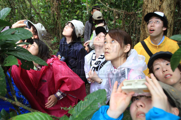 Japanese students excited to see the wild orangutan in natural surrounding at the resort.