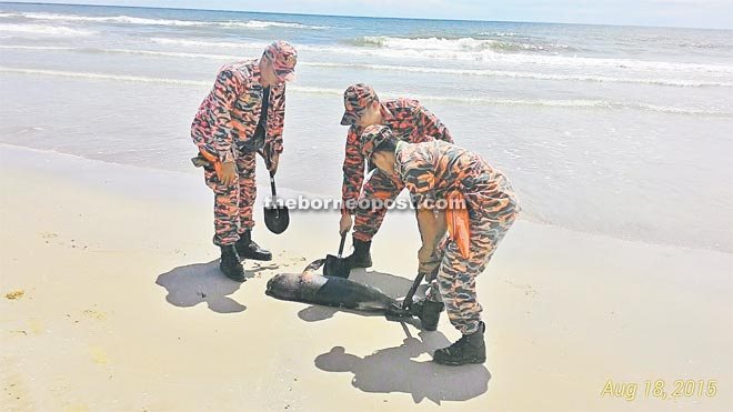 Firemen inspecting the carcass of the dolphin found washed ashore at the Esplanade.