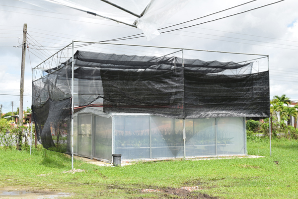 A special shed using Taiwanese technology to minimise costs.