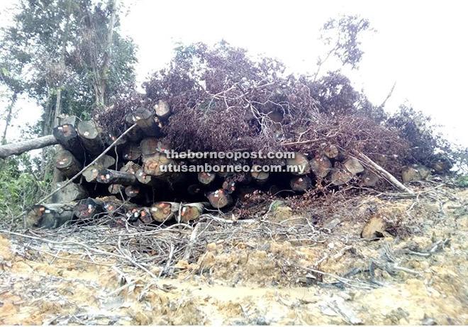 RAMPAS: Tiada sebarang petanda rasmi atau petanda hartanah dan LPI terdapat pada kayu balak dirampas di Sungai Kawan Kecil, Jalan Oya.