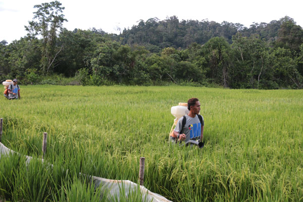 (From left) Aring and Ramli Jok, wide through a padi field.