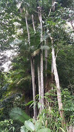 Tall palm trees are part of the flora of Mount Singai.