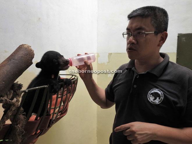 Wawa, the latest Sun Bear bottle fed by Wong.