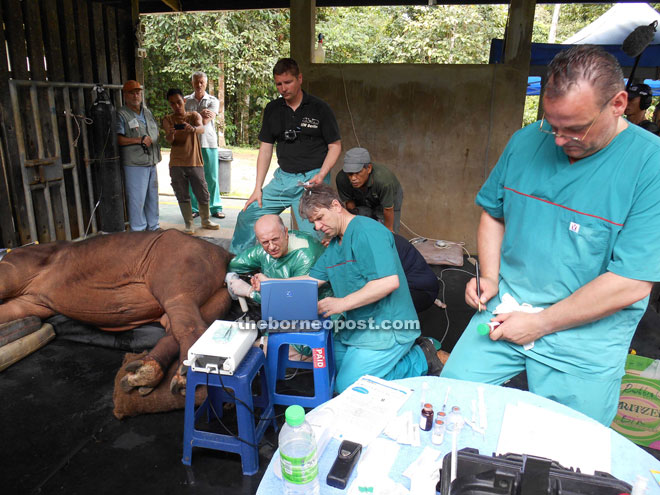 Multi-national team working to harvest eggs from a Sumatran rhino in Malaysia, with a view to producing embryos in vitro.