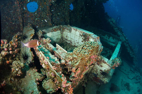 This photo taken on April 27, 2014 shows how coral and other marine life have transformed a section of the shipwreck, thought to be a bathroom, into a living reef. That section has also been destroyed. — Photos by Valerie Chai