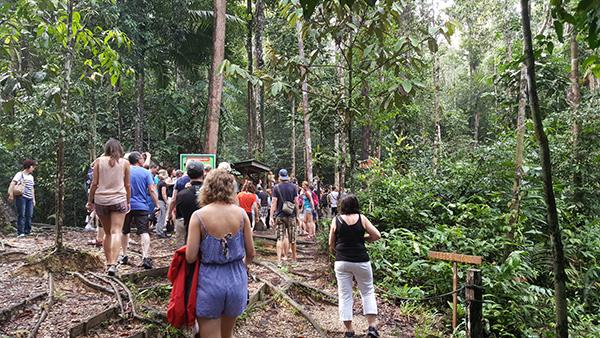 Tourists walk towards the feeding platform inside the park.