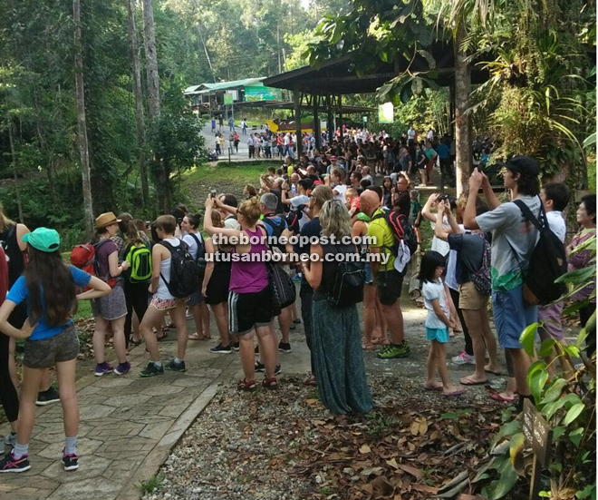 Visitors throng Semenggoh Sanctuary for a glimpse of the endangered orang utans.
