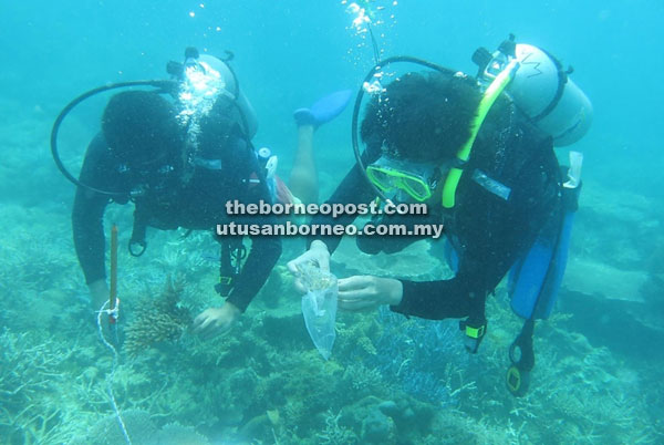 Researchers collecting samples of staghorn corals from Sabah's waters for species identification.