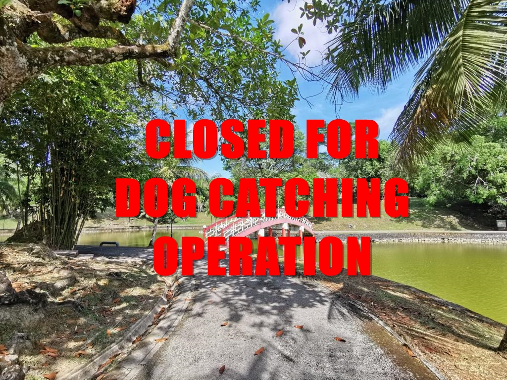 Reservoir Park Closed, DBKU To Hunt For Five Stray Dogs After Jogger Bitten (Video) | Borneo Post Online