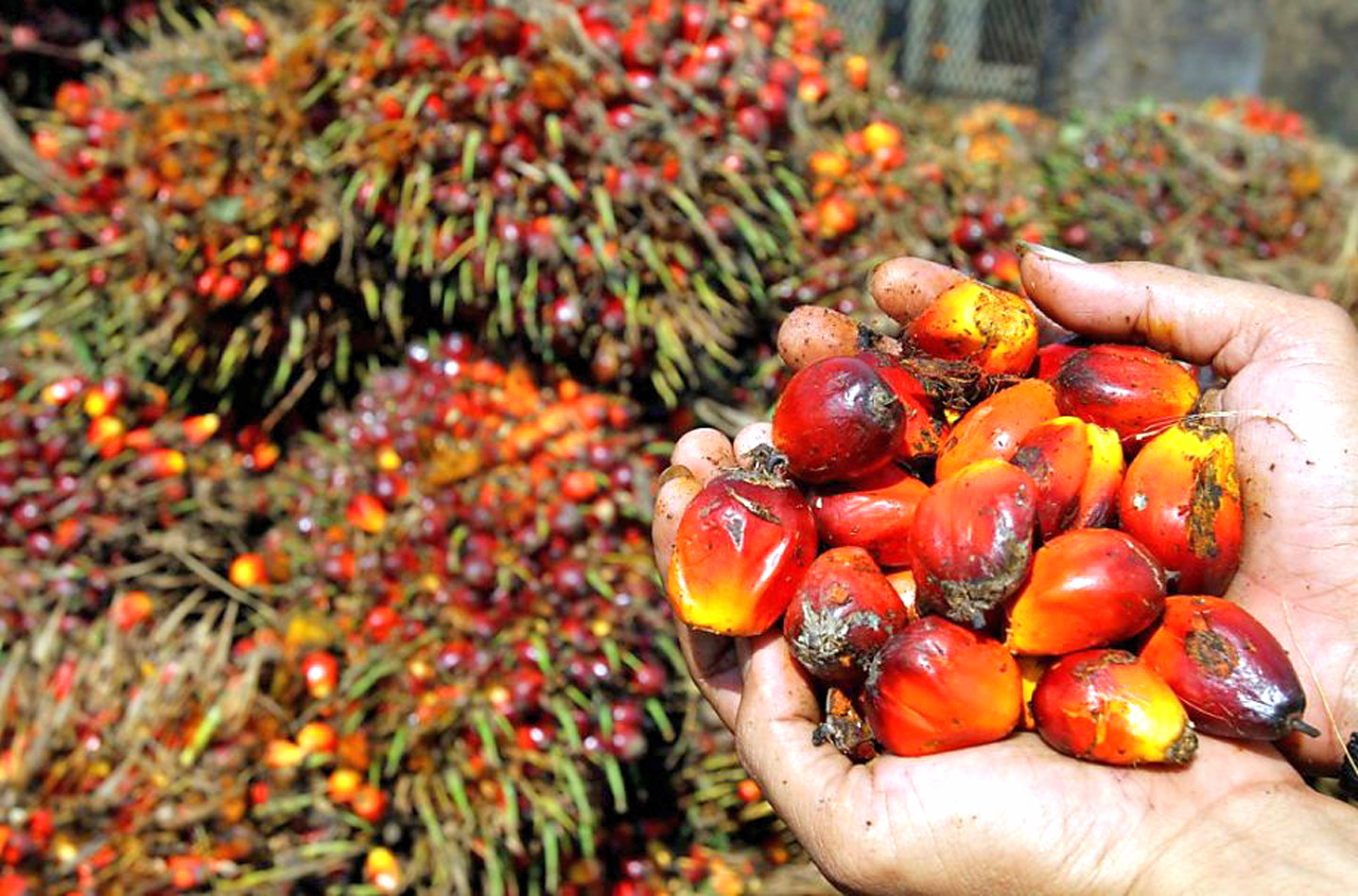 PALM OIL: CPO price outlook remains robust